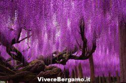 albero-della-vita-aivanhov