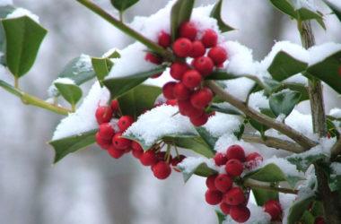 Yule, Solstizio di inverno e l'origine dell'albero di Natale